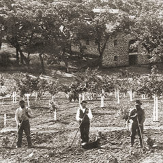 Vineyard workers in the 1880s.