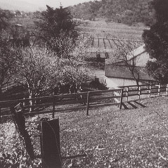A view of the Eisele Vineyard c. 1940.