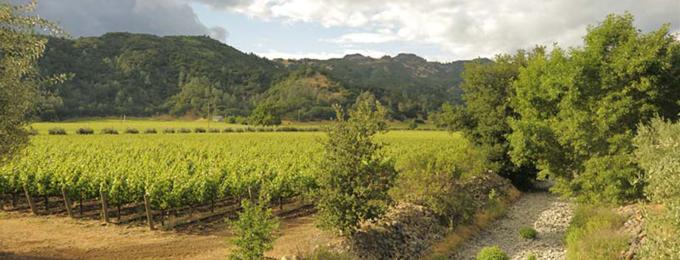 Simmons Creek runs through the center of the vineyard.